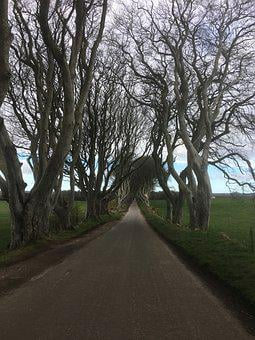 Ireland, The Dark Hedges, Game Of Thrones Series, Trees