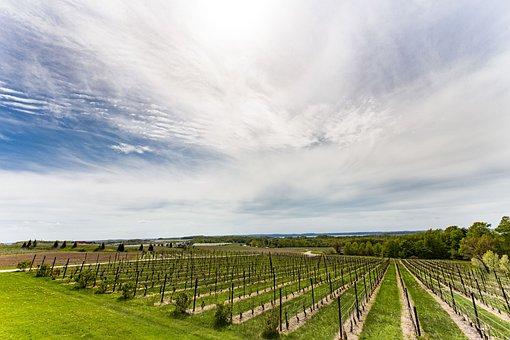 Vineyard, Winery, Grapes, Wine, Traverse City, Michigan