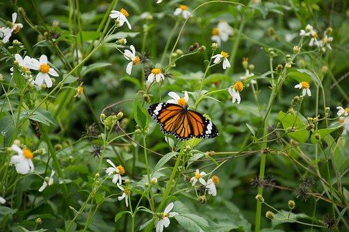 Butterfly, Flowers, Bokeh, Wings, It Leaves The Sagkrni