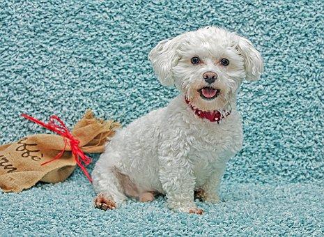 Dog, Animal, Loyalty, Cute, Four-legged, Puppy, Pets