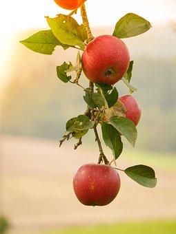 Autumn, Autumn Beginning, Leaves, Apple, Apple Tree