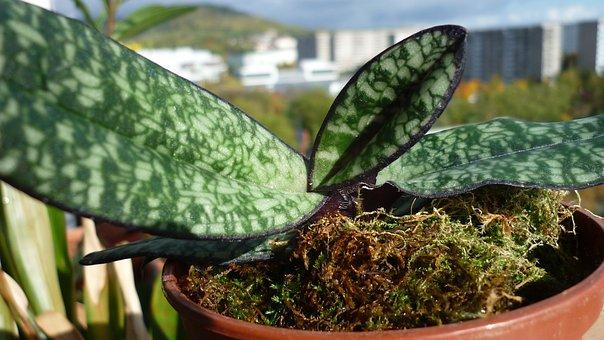Leaf Patterning, Orchid Leaf, Ornament, Beautiful