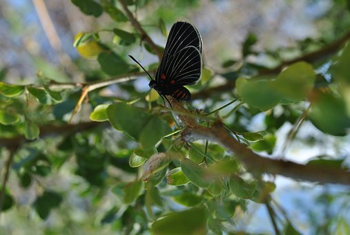 Butterfly, Fauna, Nature