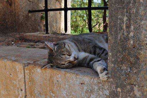 Cat, Crete, Sleeps, Lying, Monastery