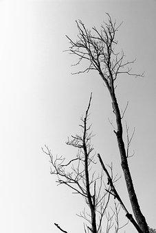 Trees, Dead Tree, Branch, Arid, Wood, Nature