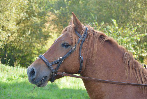 Horse, Mare, Horseback Riding, Animal, Broodmare, Filly