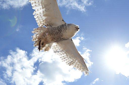 Owl, Heaven, Fly, Flight, Air, Blue Sky, Blue, Clouds