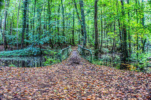 Bridge, Forest, Forest Path, Metal, Iron, Leaves