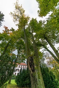 Tree, High, Large, Perspective, Deciduous Tree