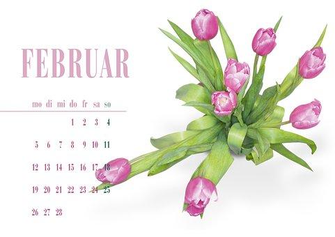 Tulip, Pink, Spring, Flowers, Close, Nature