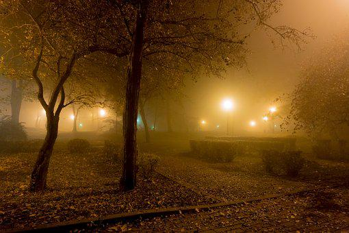 The Fog, Night, Light, Park, Alley, Tree