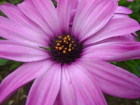 The Purple Flower, Flower, Purple, Wild Flora, Flowers