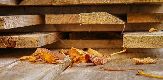 Autumn, Autumn Beginning, Leaves, Chestnut, Wood