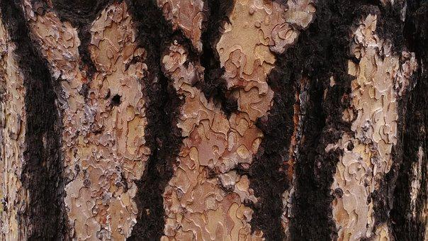 Tree, Bark, Nature, Wood, Natural, Texture, Forest