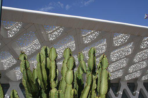 Marrakech, Airport, Cactus, Roof