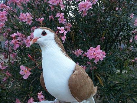 Pigeon, Bird, Animals