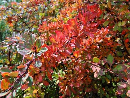Landscape, Nature, Autumn, Autumn Mood, Nostalgia