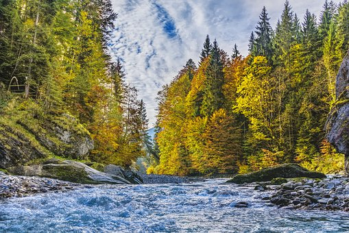 Ammer, Alpine, Autumn, Trees, River, Color, Beautiful