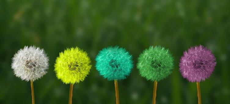 Dandelion, Colorful, People Of Color, Color Change