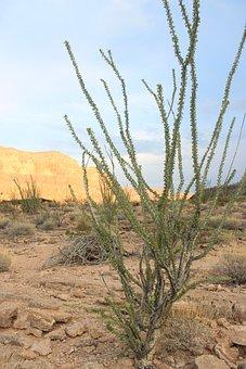 Desert, Plant, Dry, Arizona, Usa, America, Nature