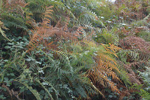 Ferns, Colors Fall, Season, Green, Doll, Plants