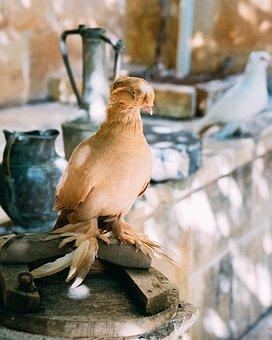 Dove, Bird, Beautiful, Bird Pigeon, Animal, Nature