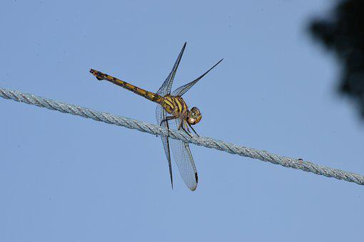 Dragon, Fly, Dragonfly