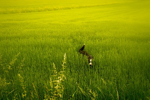 Meadow, Green, Dog, Animals, Nature, Landscape, Field