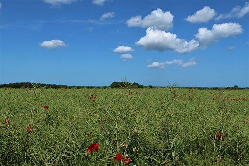 Poppy, Field, Clouds, Landscape, Countryside, Flowers