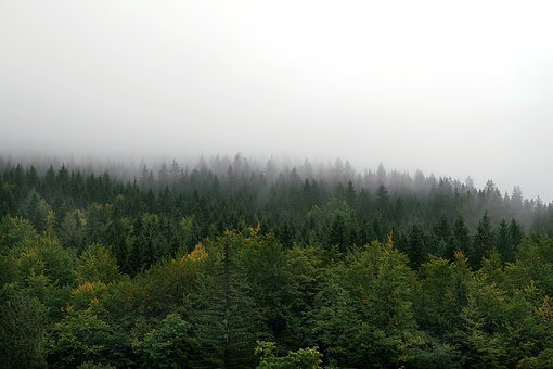 The Fog, Forest, Mountains, Tree, Pine, Spruce