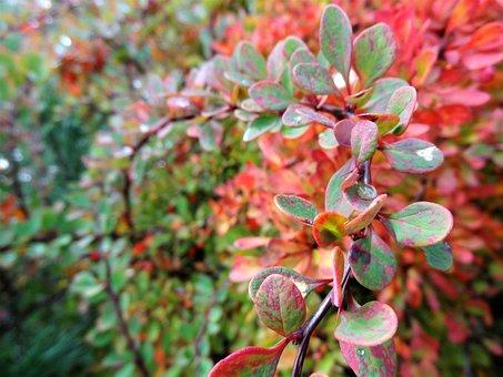 Nature, Autumn, Nostalgia, Colorful Leaves