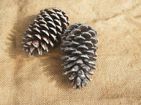 Pine Cone, Pine Cones, Rough, Prickly, Pine Tree
