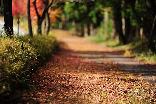 Fallen Leaves, Autumn, Road