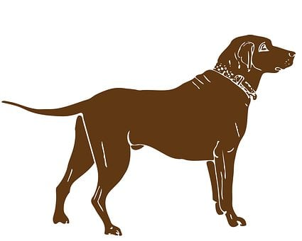 Dog, Labrador, Brown, Animal, Retriever, Pet, Canine