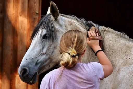 Horse Love, Horse, Clean, Brush, Curry, Horse Brush