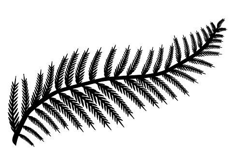 Leaf, Fern Leaf, Fern, Foliage, Silhouette, Black