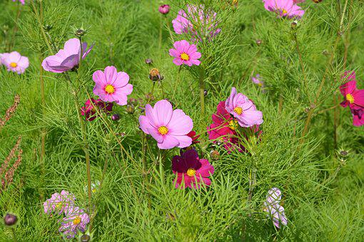 Flowers, Pink, Red, Green Foliage, Corner Rustic