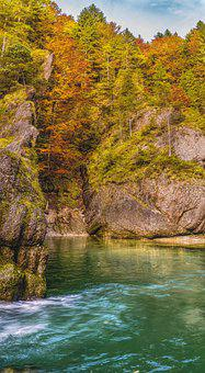 Ammer, Bunting Due To Breakage, Autumn, Forest, Colored