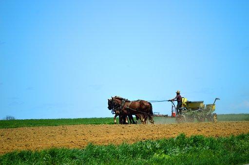 Amish, Garden To Go, Horse, Field, Spring, Farming
