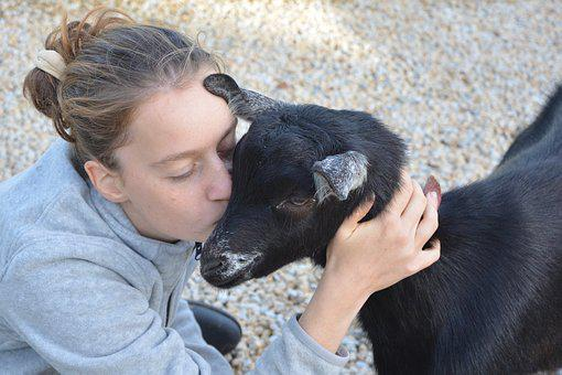 Kiss, Girl, Young Woman, Goat, Tenderness, Affection