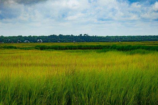 Marsh, South Carolina, Sky, Grass, Charleston, Sc