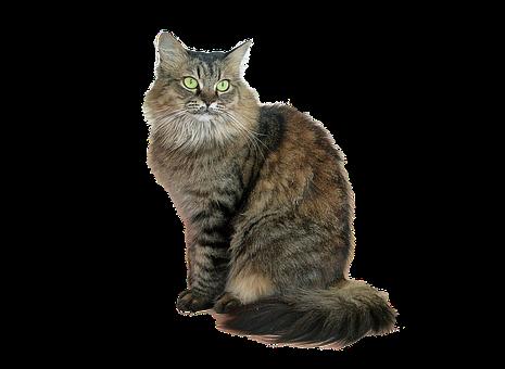 Image Cropped, Cat, Tabby Cat, Feline, Green Eyes