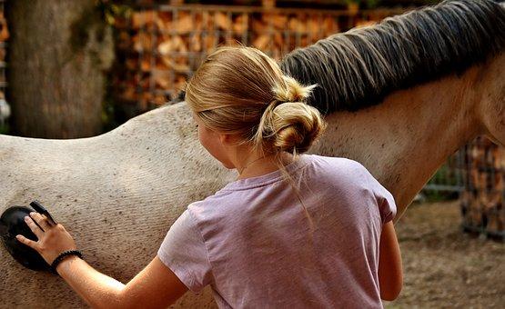 Horse, Clean, Brush, Curry, Horse Brush, Clean Horse
