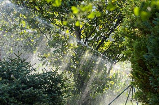 Irrigation, Magnolia, Sprinkler System, Hose