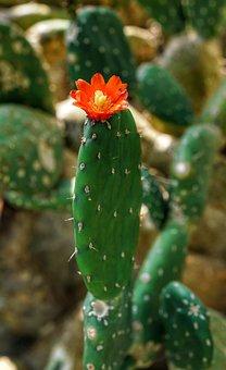 Cactus, Flower, Kew Gardens, London