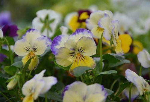 Flowers, Mini Thoughts, Yellow Purple, Plants, Nature