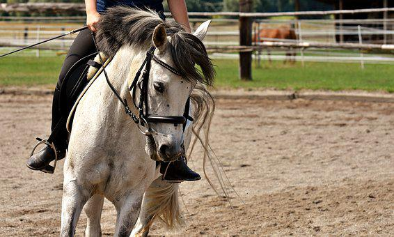 Mold, Horse, Ride, Love For Animals, Funny, Play