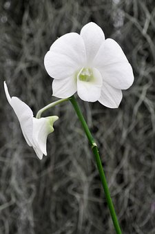 Orchid, Wild Flower, Botany, Flower, Nature, Natural