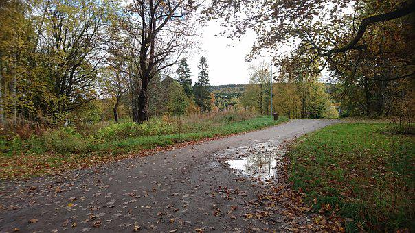 Dirt Road, After The Rain, Puddle, Sweden, Nature, Tree