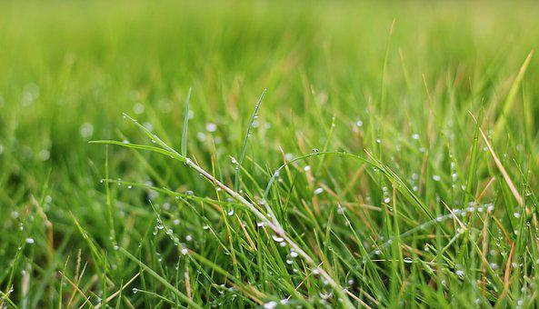 Green, Grass, Dewdrops, Nature, Spring, Summer, Plant
